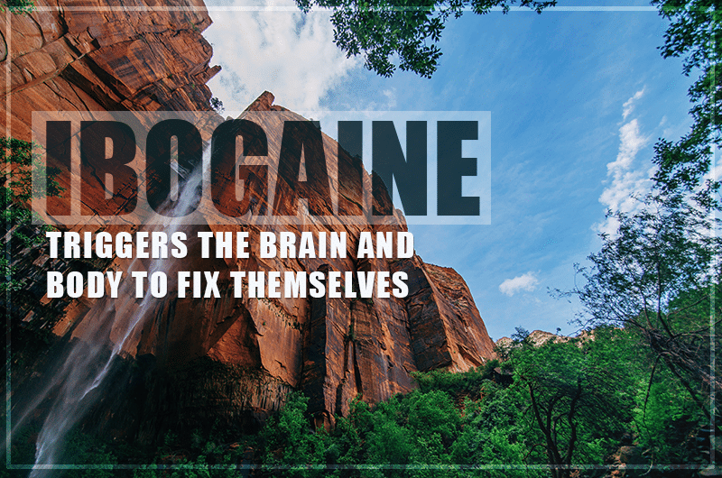 Ibogaine triggers the brain and body to fix themselves